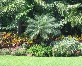 Landscaping Design in Miami
