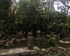 Exotic Landscape Design in Cutler Bay