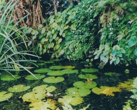 ponds-6