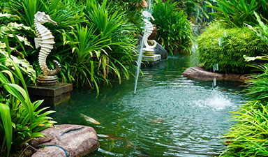 Koi Ponds Installation in Palmetto Bay, Pinecrest, Kendall, Coral Gables