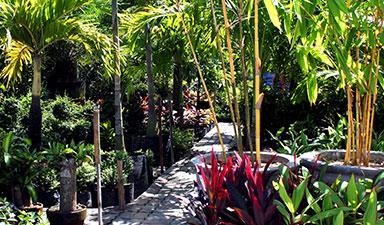 Landscape Installation in Miami Beach, FL